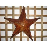 Estrela de pele